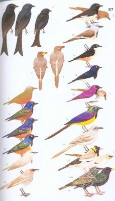 Kelet-afrika madarai-Collins Field Guide: Birds of Eastern Africa