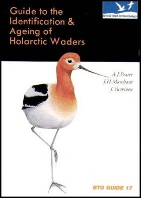 Gázlómadár faj és kor határozó-Guide to the Identification and Ageing of Holarctic Waders