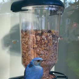 Pet-Birds-Plastic-Automatic-Seed-Feeder-Wild-Bird-Yard-Feed-Transparent-Window-Hanging-Suction-Cup-Pet.jpg_640x640