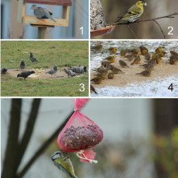 Fig-1-Examples-of-the-following-bird-feeder-categories-1-typical-bird-table-feeders